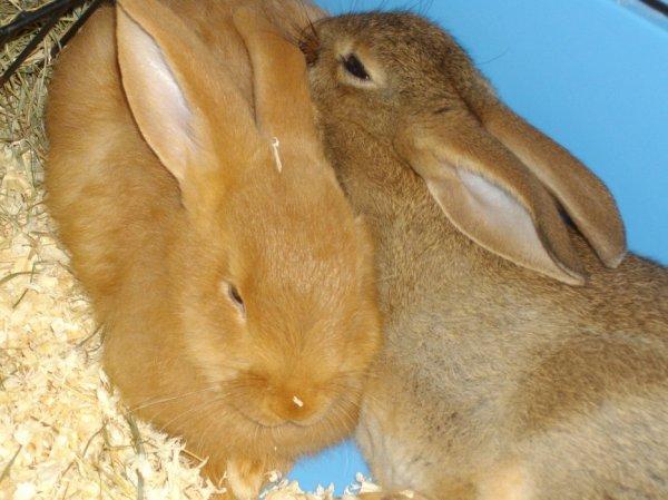 4) La journée du lapin