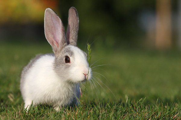 5) Le comportement du lapin