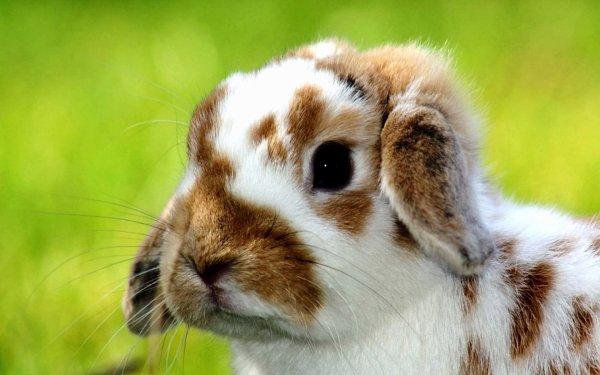 7) Où trouver un lapin nain ?