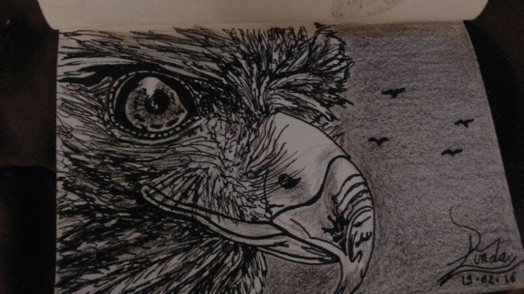 Les aigles ne volent pas avec les pigeons !! By Tatatron !!