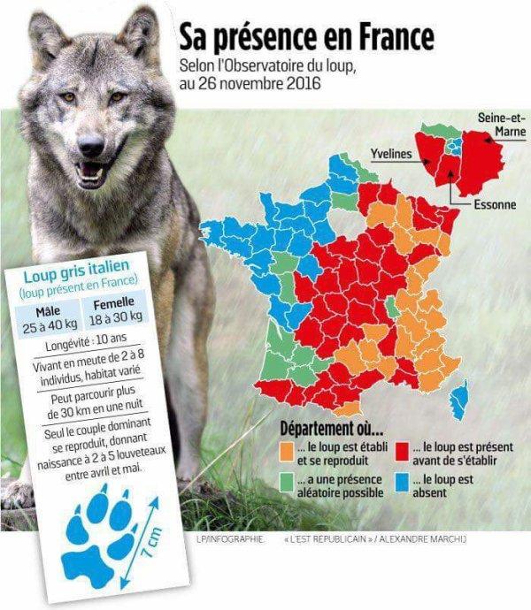 Carte de présence des loups en France