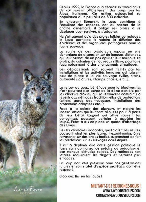 Ne pas tuer les loups