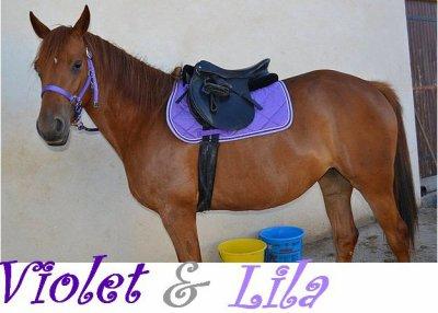 Equipement Violet - Lilas / Cheval & Cavalière / Titte-trotteuse