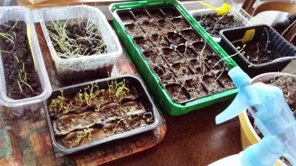 Comme nous avons un temps très clément nous en avons profité de faire un peu de jardinage, afin d'accueillir le printemps dans de bonnes conditions... Allez, hop au jardin !