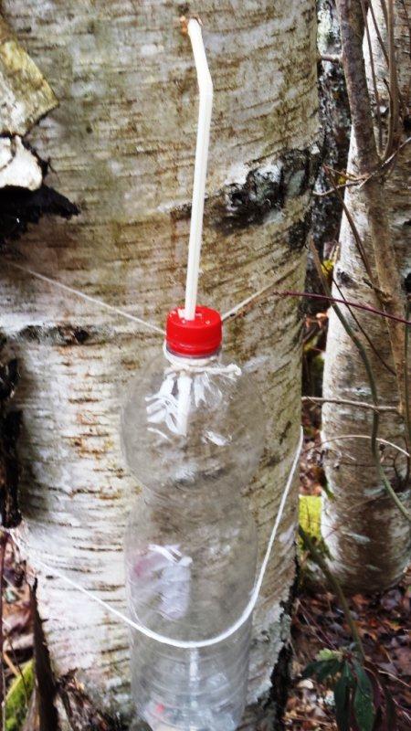 Besoin de purifier son organisme ? Débarrassez-vous des mauvaises toxines de l'hiver grâce à la sève de bouleau. Ce puissant dépuratif naturel draine et régénère le corps en douceur.