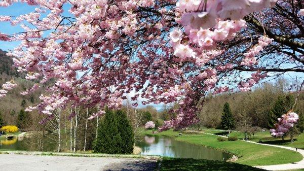 Rencontre avec le printemps
