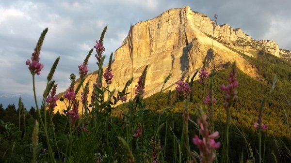 Chaque année pendant le mois de mai, une courte balade au Col du Granier est incontournable pour profiter des sabots de Vénus en fleur. Nous avons profité du coucher de soleil, qui d'ailleurs constituera certainement un des moments magiques de notre fin de journée...