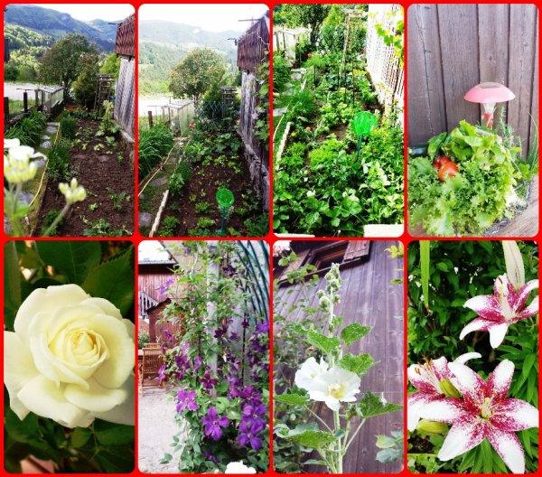 moi et mon jardin j 39 aime tre dans mon jardinet semer planter arroser regarder pousser. Black Bedroom Furniture Sets. Home Design Ideas