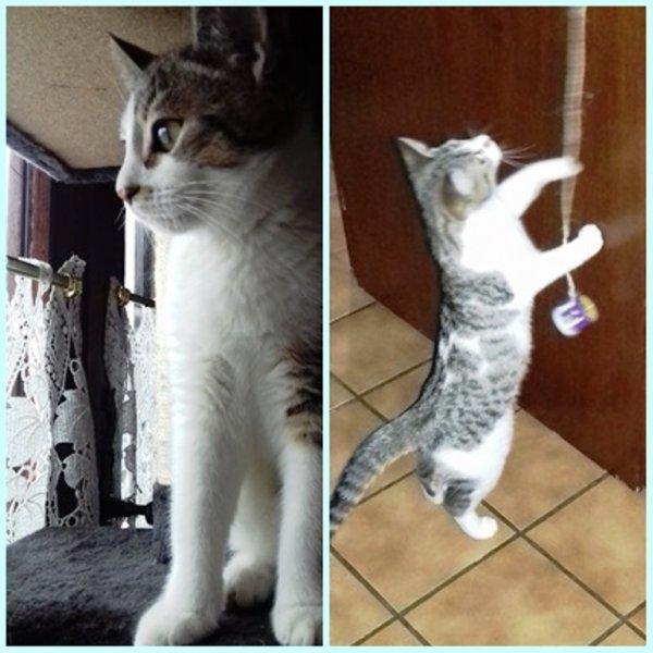 Des nouvelles de notre chaton : Chaque jour, Vinette grandit un peu plus et devient une adorable et superbe chatte dont le passe-temps préféré est de dormir dans mes bras.