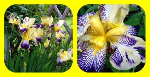Évolution Du Jardin…  S'il ne pleuvait pas autant tout les jours, tout pousserez presque merveilleusement bien !