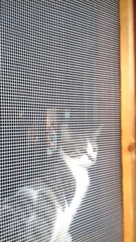 J'ai trop peur de laisser sortir mon chat. Que faire ?