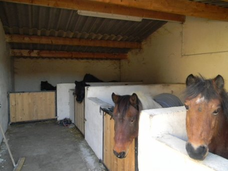 Les boxs poneys