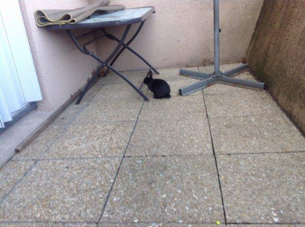 mon lapin qui est dehors
