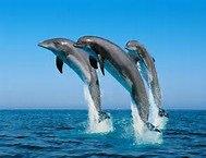 de beau dauphins