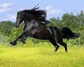 un superbe cheval