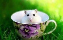 ptit hamster
