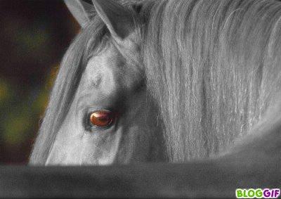 magnifique montage , d'un cheval . super beau