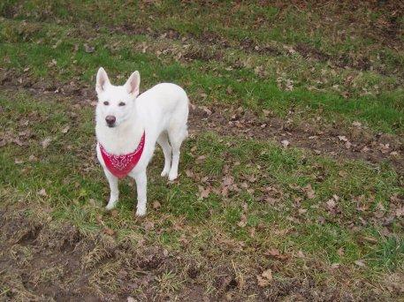 Vive la boue de l'hiver...et les chiens blancs !