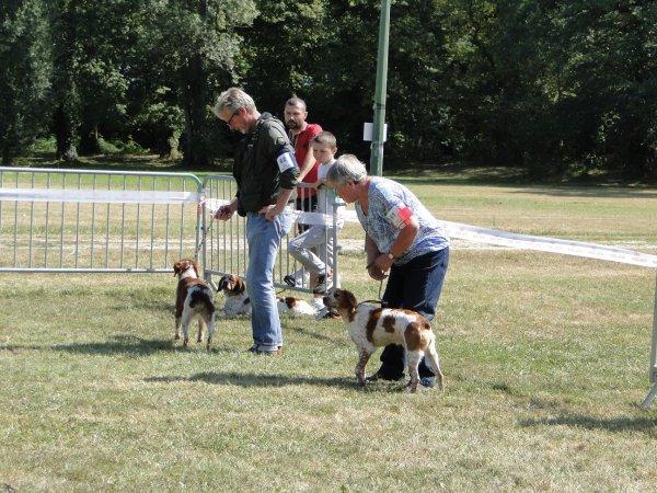 Nationale d'Elevage à Romorantin-Lanthenay- 3 chiens de la Roche des Aulnaies = 3 Excellent . Sans oublier Lyne 1 Exc et Véga la super mamie 2ème Exc