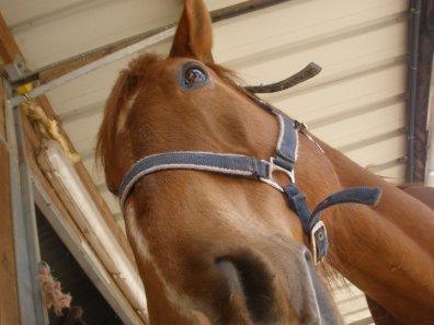~ Joker jet'aime telement, un amour de cheval ! ♥.