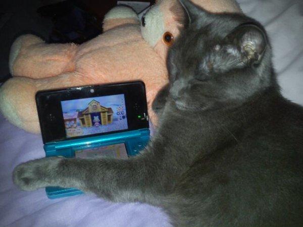 Quand mon chat garde la 3ds :p