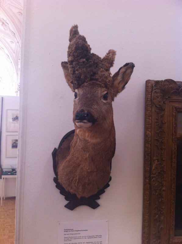 This deer is weird