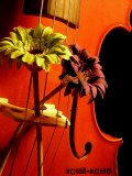 Photo de celli-cello-photos