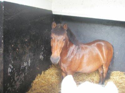 Un poney super !! ♥