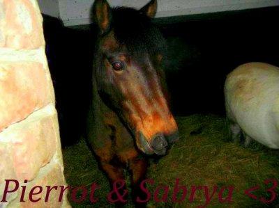 Pierrot & Sabrya .. ♥