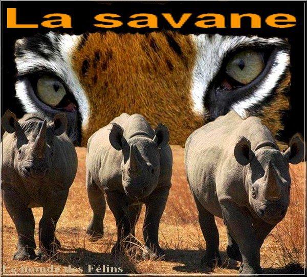 (l)(l) LA SAVANE (l)(l)