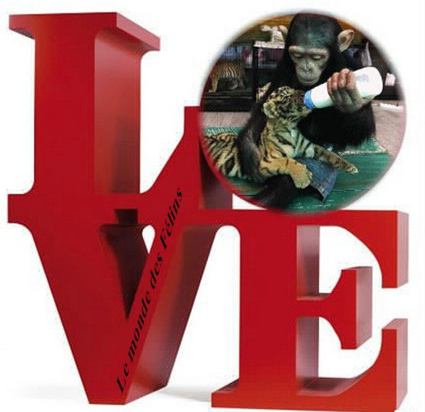 (l)(l)  Montage LOVE (l)(l)