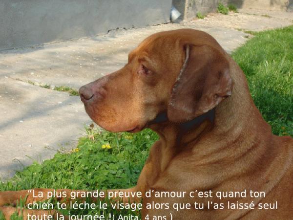 Populaire Les chiens, citations 2ème partie. - Blog de clubcaninloupdenaisien PB13
