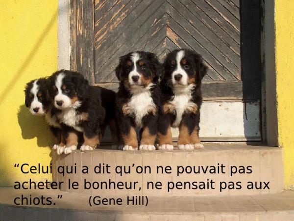 Populaire Les chiens, citations 3ème partie. - Blog de clubcaninloupdenaisien PB13