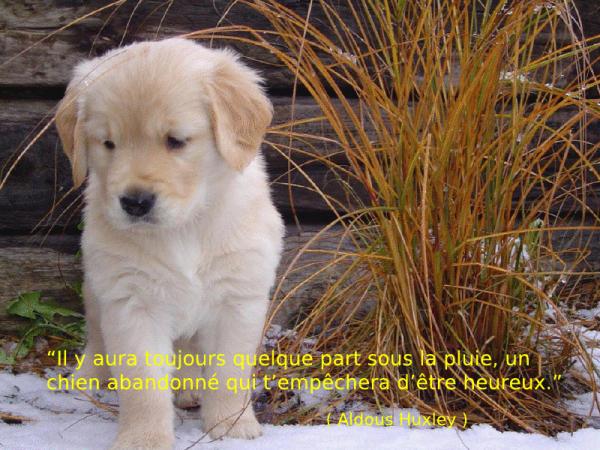 Populaire Les chiens, citations 4ème partie. - Blog de clubcaninloupdenaisien PB13