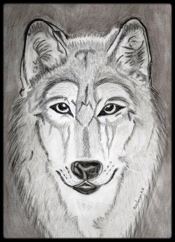 Dessin de loup blog de clubcaninloupdenaisien - Tete de loup dessin ...