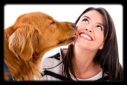 Pourquoi les chiens nous lèchent ?
