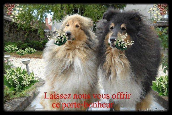 Le Muguet : un poison mortel chez le chien et le chat.