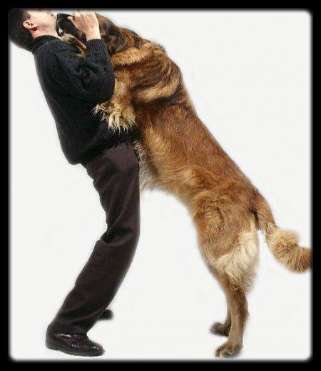"""Apprendre à gérer son chien même si """"Il est gentil"""""""