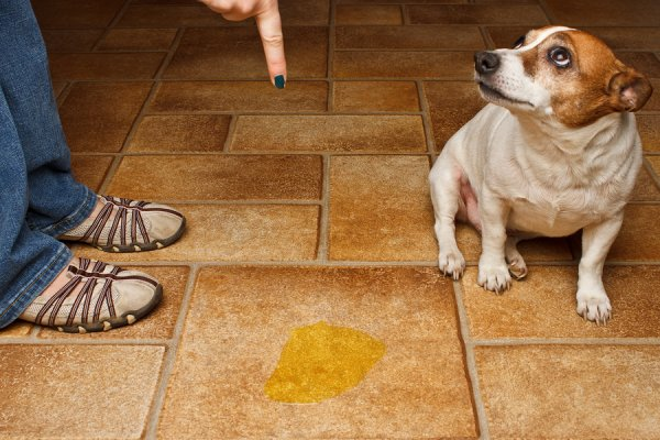 Mon chien sait très bien qu'il a fait une bêtise !