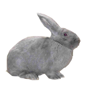 Pourquoi adopter un lapin