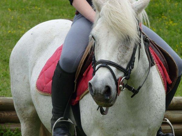 """""""Lance ton coeur par dessus l'obstacle et ton cheval suivra ... """""""