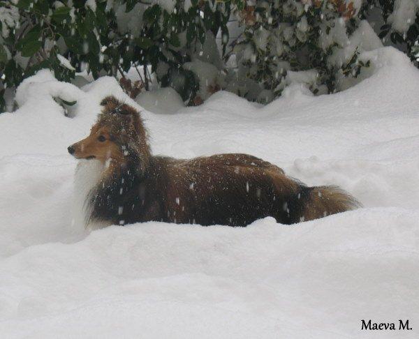 Iris et la neige !!!