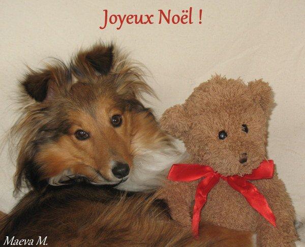 JOYEUX WOUAF ET LÉCHOUILLES DE NOËL !!!