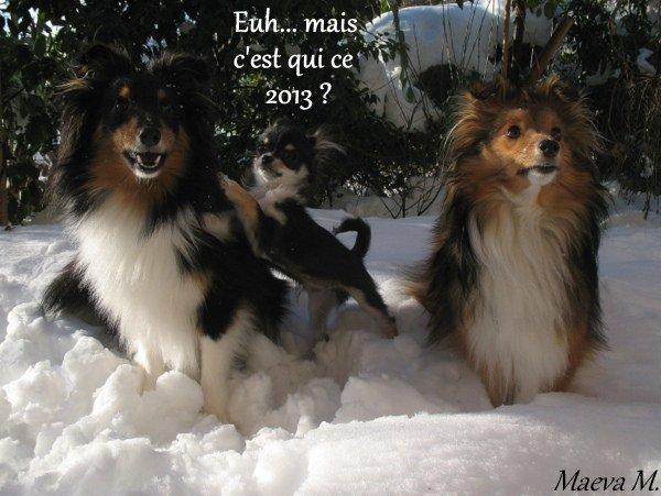 Bonne et heureuse Wouaf 2013 !