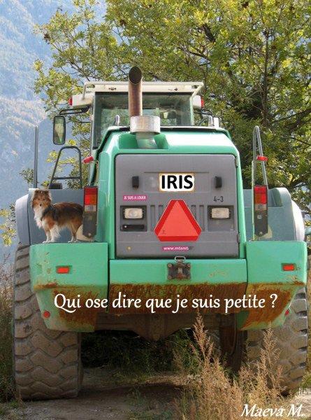 Iris et la carrière de pierres