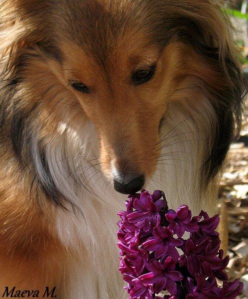 Le printemps d'Iris