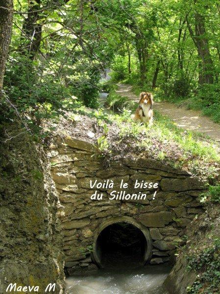 Iris et les bisses du Valais