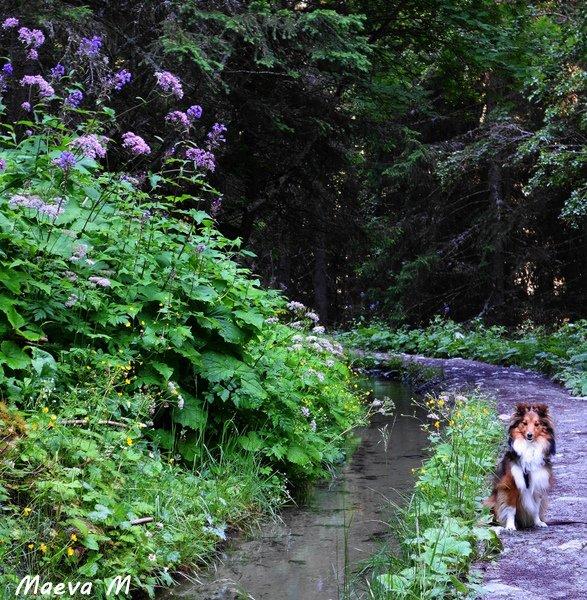Iris et le vallon de Réchy