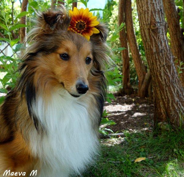 Iris au pays des Mille et Une Fleurs