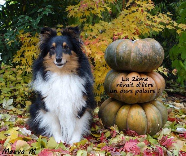 Les délices de l'automne !